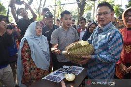 Si Jampang Montong, durian 9,6 kilogram asal Desa Sempalai