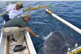 Gubernur Gorontalo ajak Kodiklat TNI-AD wisata hiu paus