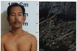 Menginap di rumah istri kedua, pemiliki 500 gram ganja ditangkap polisi Bahorok Langkat