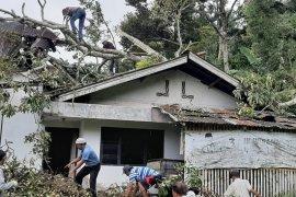 Ada 25 bangunan di Agam rusak tertimpa pohon