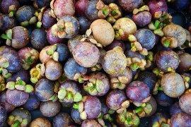Purwakarta bidik ekspor buah manggis ke Timur Tengah