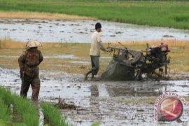 Distan Tabalong realisasikan optimasi 2.903 hektare lahan rawa