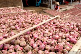 Parfum bawang merah diyakini mampu tangkal COVID-19