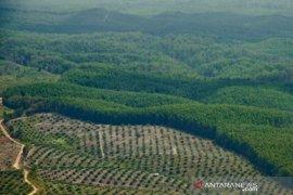 Kenaikan harga sawit di Riau didorong lonjakan permintaan China