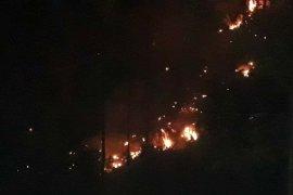 Tiga hektare lahan serai wangi terbakar di Gayo Lues