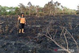 Kebakaran hutan dan lahan masih terjadi di Penajam Paser Utara