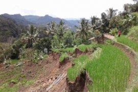 Areal sawah seluas  2,5 hektare di Kuningan longsor akibat hujan lebat