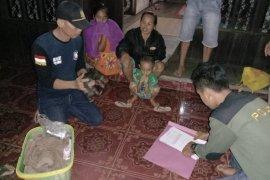 KPH Tabalong evakuasi satwa langka Beruang Madu