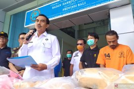 BNNP Bali musnahkan 53 paket ganja milik jaringan Medan-Bali
