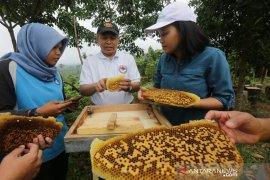 Warga sekitar Taman Nasional Bukti Tigapuluh dilatih budidaya lebah