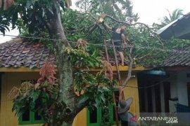 Empat rumah dan dua sekolah di Cianjur rusak berat akibat puting beliung