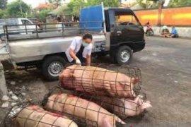 Jelang Galungan,  Pemkot Denpasar periksa kesehatan hewan
