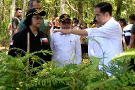 KLHK tindaklanjuti arahan Presiden Jokowi untuk lakukan rehabilitasi lahan