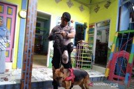 Pastikan kematian balita tanpa kepala, polisi turunkan anjing pelacak