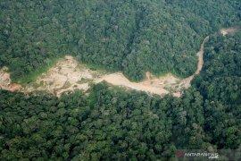 Bupati Sintang tolak izin tambang emas ribuan hektare di kawasan lindung
