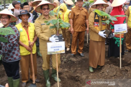 Pemkab Bener Meriah kembangkan pisang cavendish orientasi ekspor