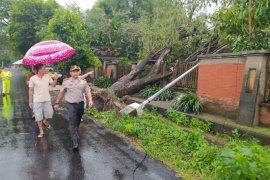 Sejumlah pohon di Blitar tumbang diterjang angin kencang