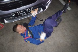 Anak kucing  di mesin mobil selamat dari maut berkat Damkar