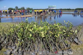 Polres Abdya tanam ribuan mangrove di kuala Lama Muda