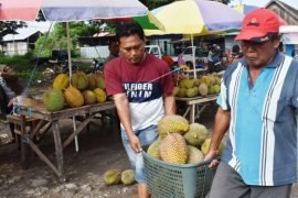 Penjual Musiman Durian Lokal Page 1 Small