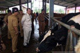 Sumbarsiapkan inseminasi 120.000 ekor indukan sapi pada 2020