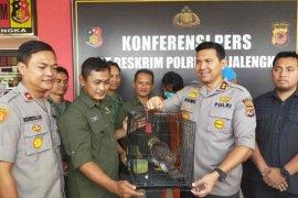 Polres Majalengka tangkap dua penjual hewan dilindungi via medsos
