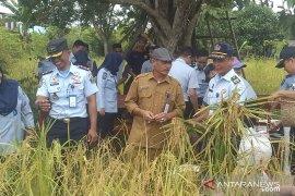 Rutan Putussibau panen padi tanaman para Napi