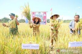 Untuk serap beras lokal, Pemkab Landak dorong sektor hilir pertanian