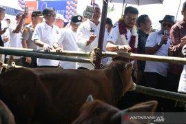 Sumut targetkan KUR sektor peternakan Rp183,7 miliar pada 2020