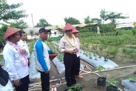 Bupati Bangka Tengah dorong KWT tanaman sayur keluarga