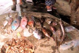 KKP kaji fenomena kematian ikan  di Maluku Utara