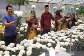 Bernilai ekonomis, bunga krisan mulai dikembangkan di Aceh Tengah
