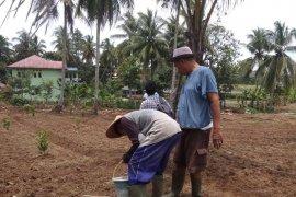 Warga binaan Lapas Rangkasbitung-Lebak lakukan gerakan tanam jagung