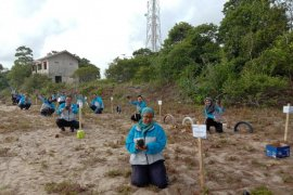 Antara TV - Jasa Raharja Babel tanam 100 bibit pohon cemara laut