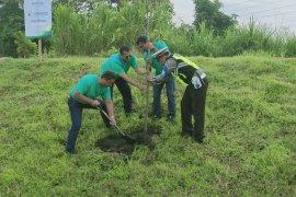 Jasamarga tanam seribu pohon damar di sepanjang tol Pandaan-Malang