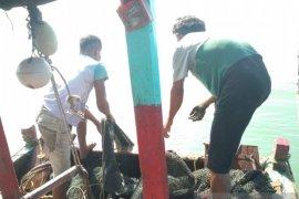 Pemkab Mukomuko berharap tambahan solar subsidi untuk nelayan