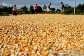 Target produksi jagung nasional 2020 Page 1 Small