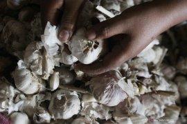 Kenaikan harga bawang putih picu inflasi di Kota Malang