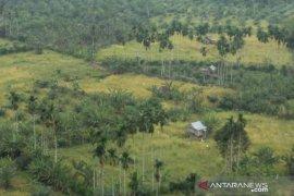 Petani di Mukomuko usulkan bantuan benih padi varietas inpago