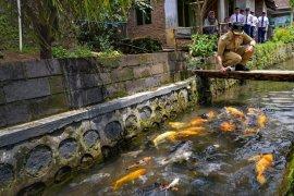 Warga Banyuwangi manfaatkan aliran sungai jadi kolam ikan
