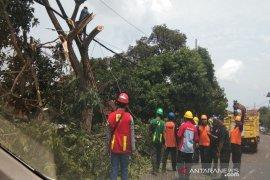 Cegah pemadaman listrik, Gubernur Babel setuju PLN tebang pohon