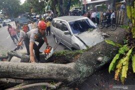 Puluhan pohon tumbang akibat angin ribut di Sleman