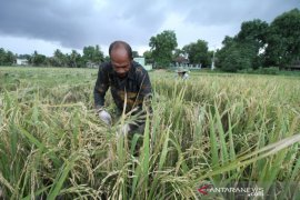 BPS catat nilai tukar petani Aceh turun 1,87 persen