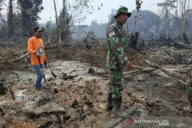 5 hektare lahan gambut kembali terbakar di Aceh Jaya