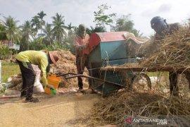 Harga gabah turun di Aceh Timur