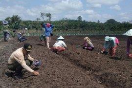 Distan Mukomuko segera tetapkan penyuluh pertanian swadaya