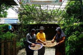 Warga Kampung  Herbal Surabaya budi daya tanaman empon-empon