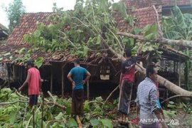 Cuaca ekstrem, 52 rumah warga di Bantul rusak tertimpa pohon tumbang