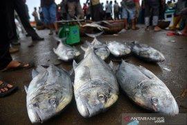 Hasil tangkapan ikan menurun