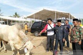 Pemkab Abdya dorong peternak budidayakan sapi lokal